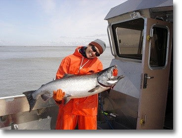 Copper River Salmon on Fishing Boat in Alaska picture