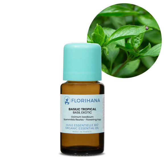 Basil Exotic Essential Oil – 15g