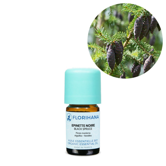 Black Spruce Essential Oil - 5g