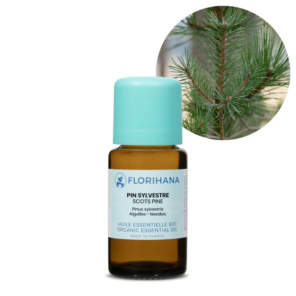 Scots Pine Essential Oil – 50g