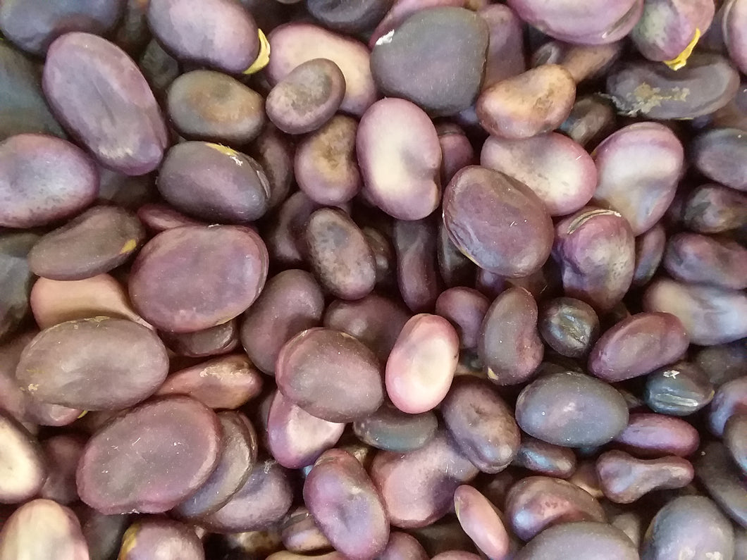 Bean, Frog Island Native Fava