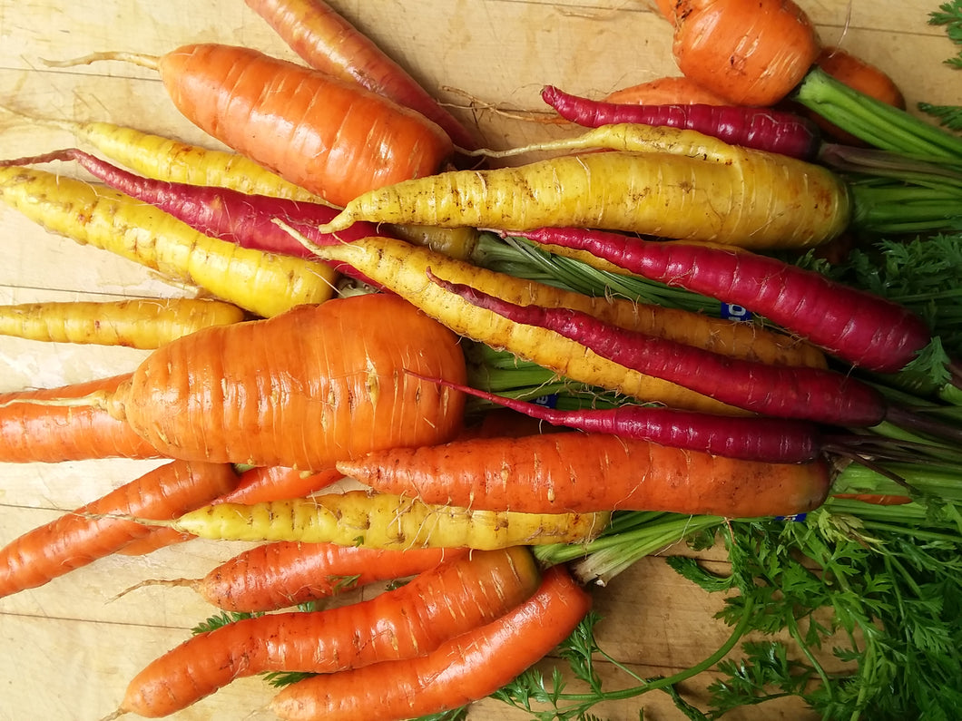 Carrot, Rainbow Mix