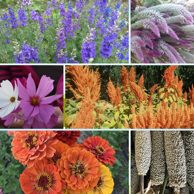 Cut Flower Garden Seed Collection