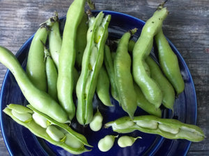 Bean, Windsor Fava