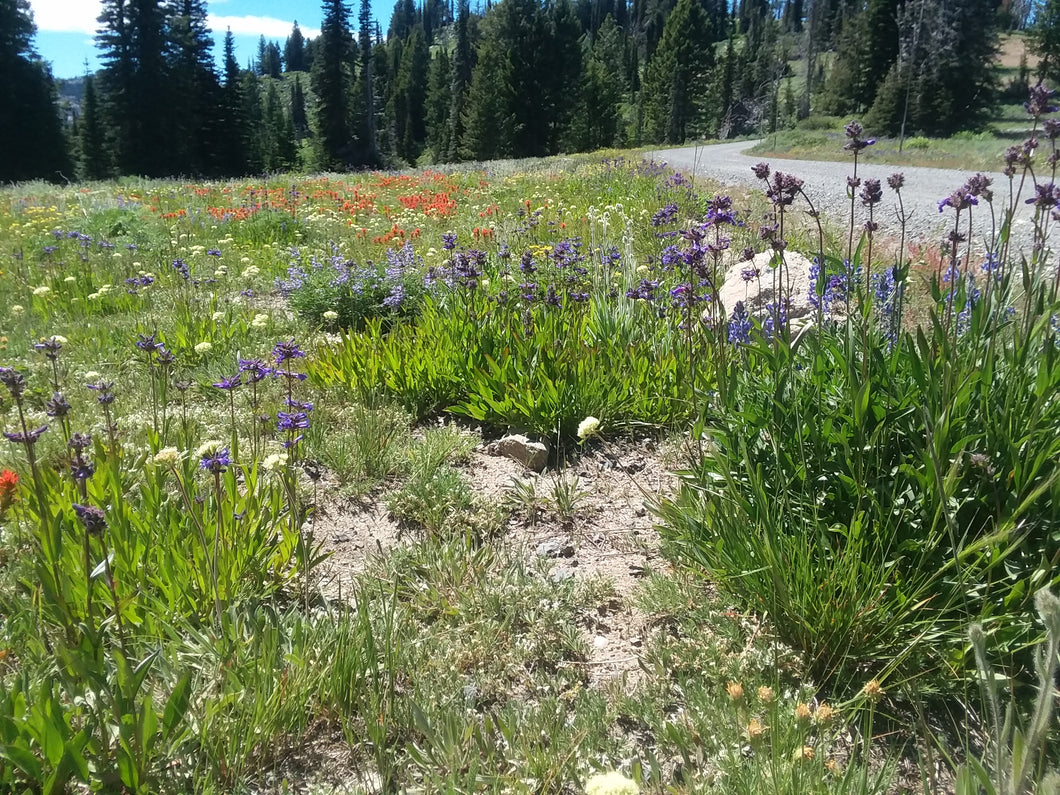 Flower Mix, Idaho Wildflowers