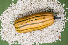 Load image into Gallery viewer, Squash, Delicata