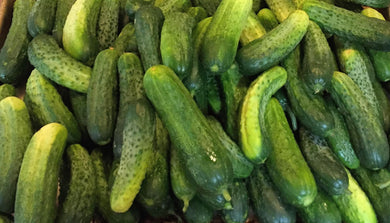 Cucumber, Addis Pickling