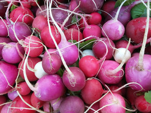 Radish, Easter Egg Mix