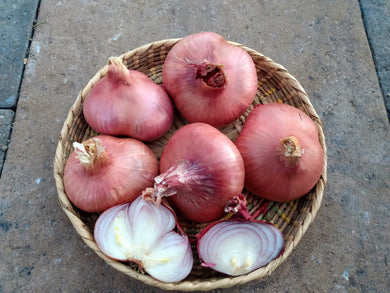 Shallot, Ed's Red