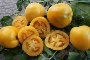 Tomato, Moonglow