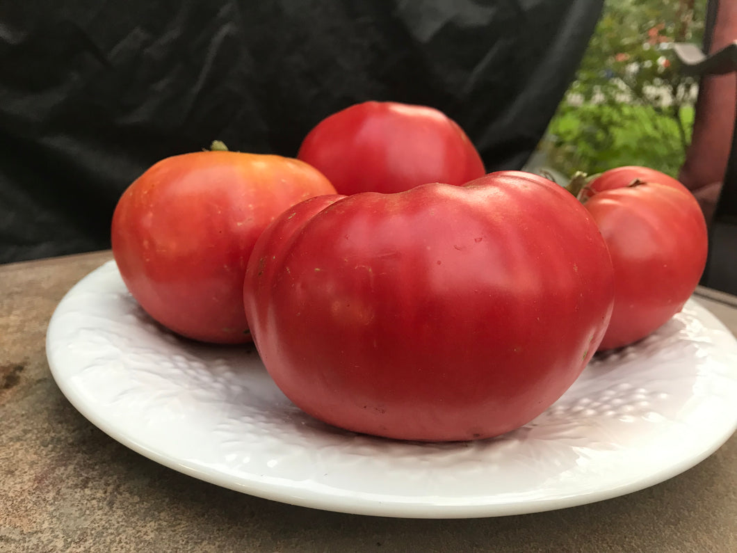 Tomato, Mortgage Lifter