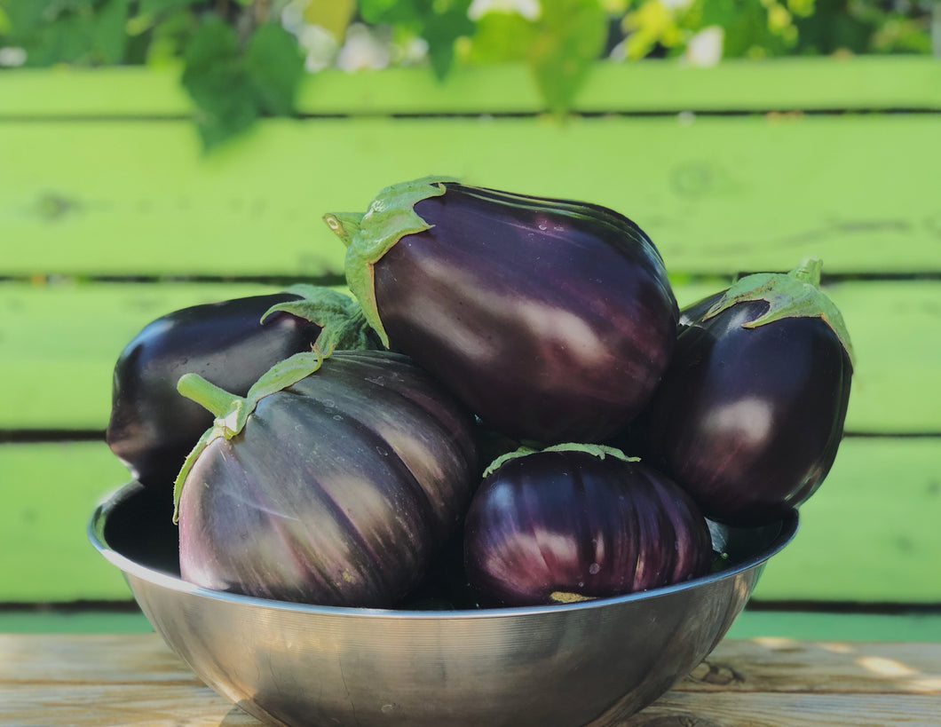Eggplant, Black Beauty