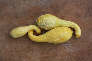 Squash, Yellow Crookneck