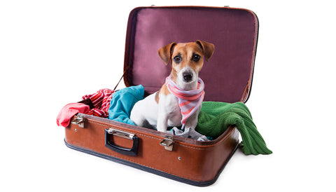 separation anxiety dog travel