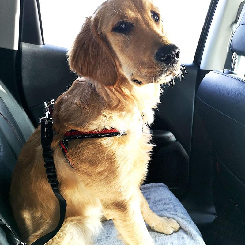 Dog Seatbelt - PawSafe