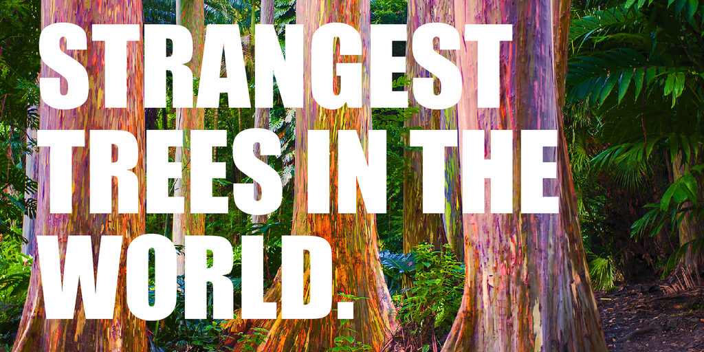 Strangest trees in the world