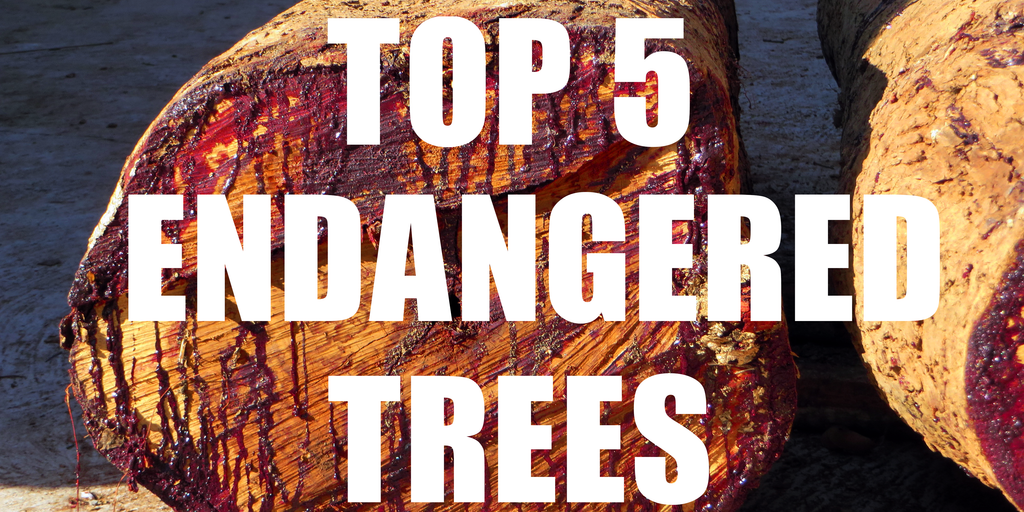 Top 5 most endangered trees
