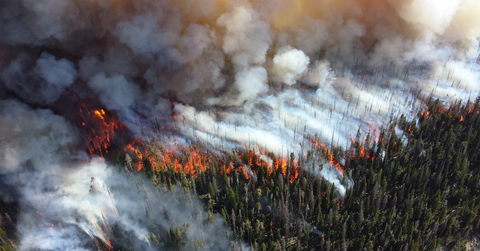 Fire spreading throughout forest