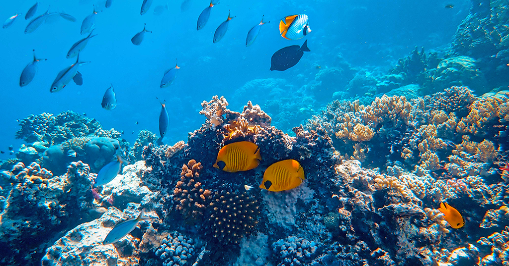 Healthy coral reef with many fish and bright sunlight