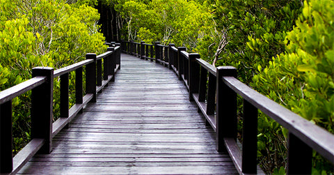 Bridge through a mangrove forest showing urban integration with nature