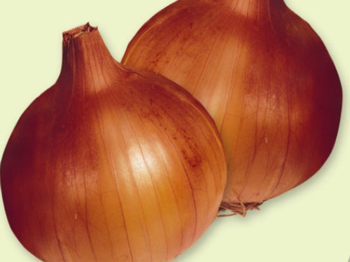 AUSTRALIAN BROWN INTERMEDIATE DAY BROWN ONION