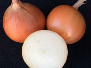 Capricorn Onion Seeds (Prices From)
