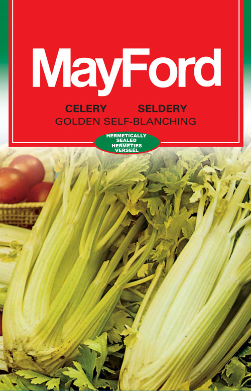 Golden Self-Blanching Celery Seeds (Prices From)