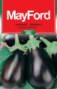 Black Beauty Oval - Purple/Black Eggplant Seeds (Prices From)