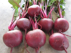 Falcon F1 Round Red Beet Seeds (Prices From)