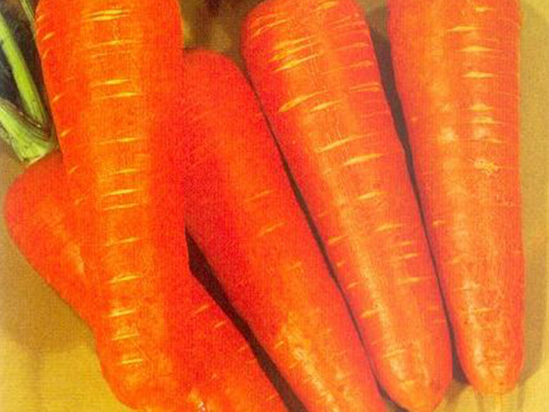 KURODA (SAKATA) CARROT (Prices from)