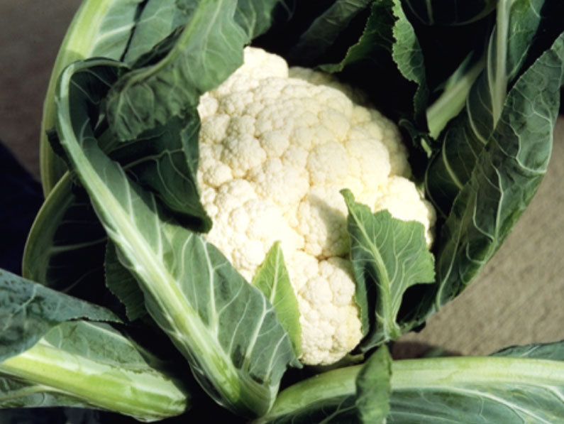 Merton Medium Early Cauliflower Seeds (Prices From)