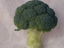 Parthenon Broccoli Seeds (Prices From)