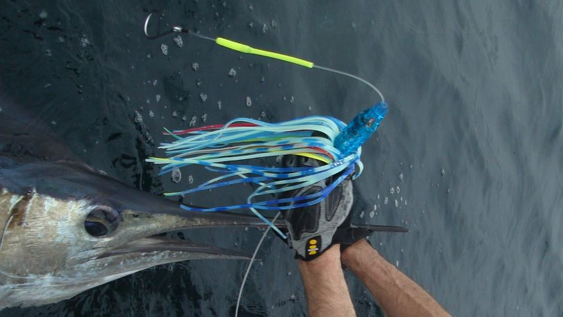 Stripped Marlin lure is a blue luminator trolling lure.