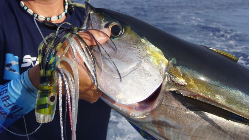 Yellowfin Tuna Lure