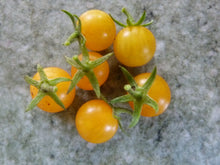 Laden Sie das Bild in den Galerie-Viewer, 6er Pflanzenset: Wildtomaten