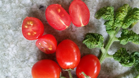 "-0548-""Curley Kaley (Zwergtomate)"