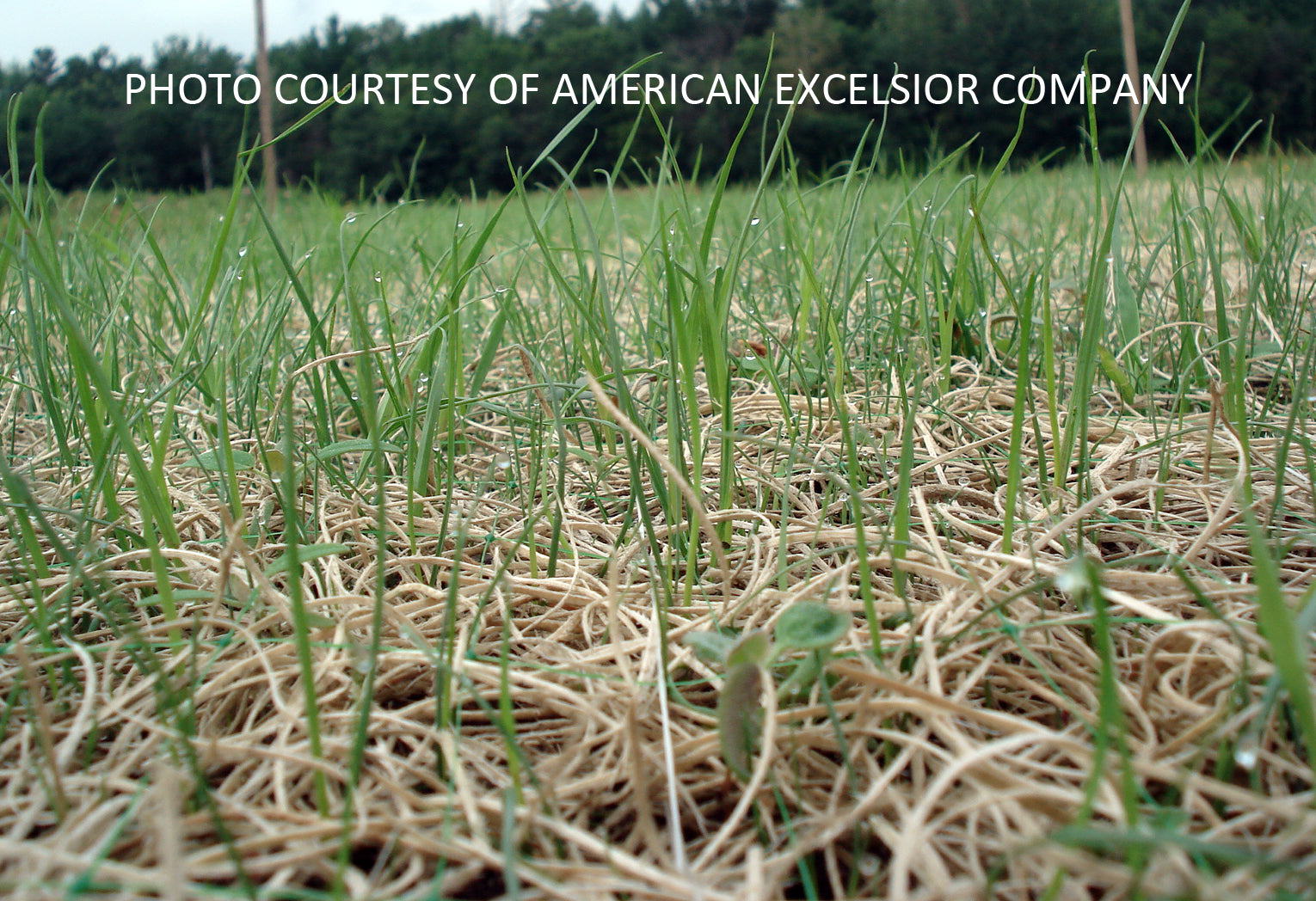 Curlex with Grass Growing Through It