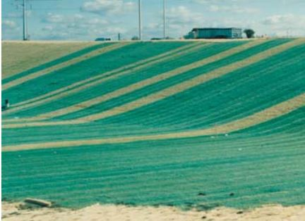 Green curlex erosion control blankets on hillside