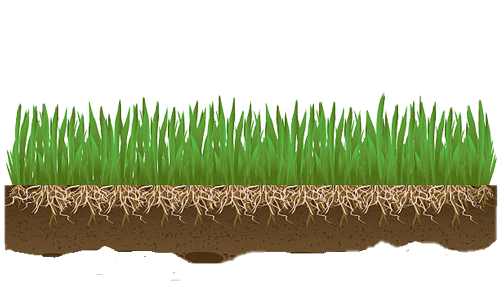 Grass seed roots stabilize soil