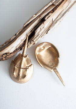Horseshoe Crab Bottle Opener - December Thieves