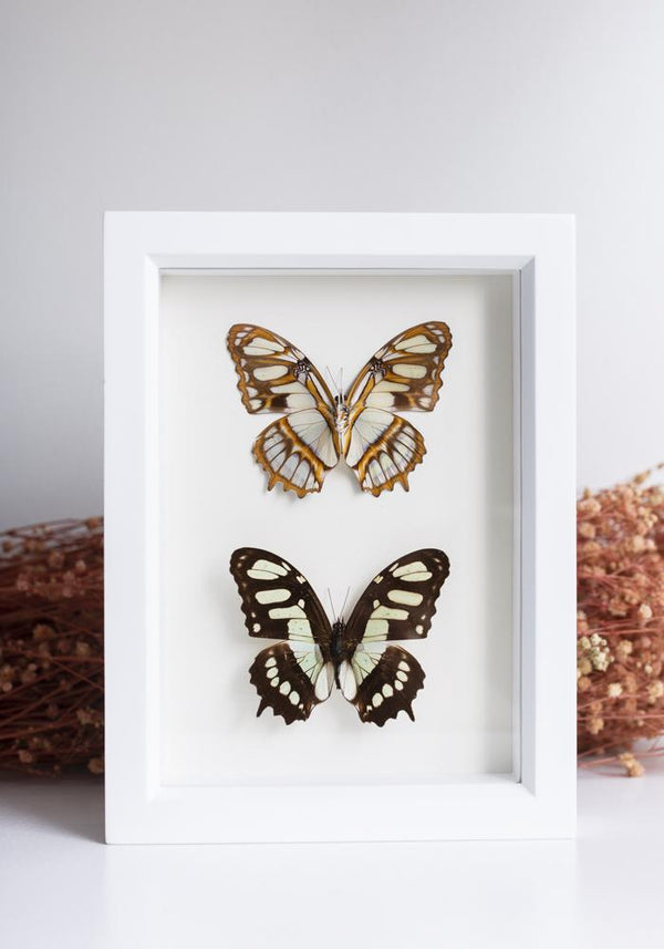 Framed Malachite Butterfly Set