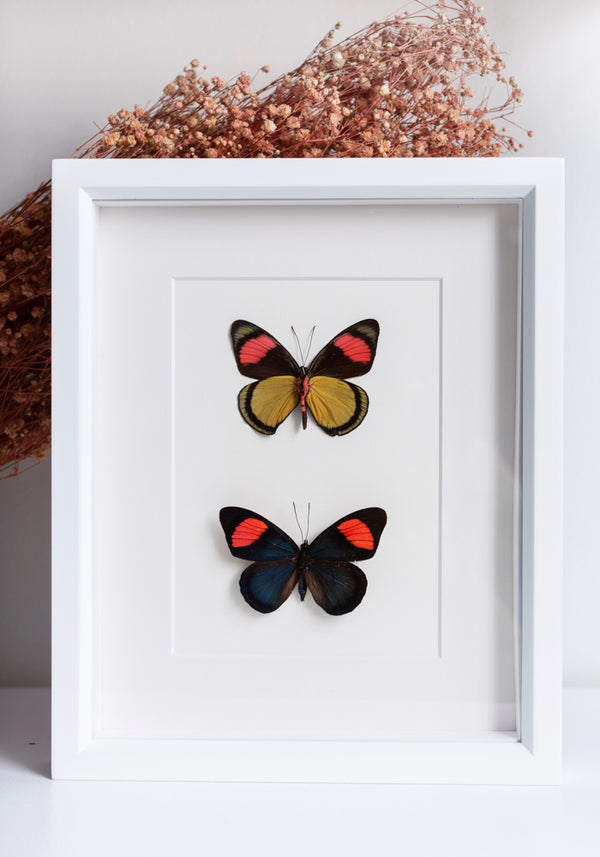 Framed Painted Beauty Butterfly Set