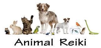 Animal Reiki Class - Reiki in Venice Florida