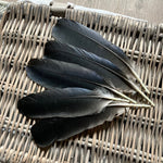 Black Crow Feathers (Large Rounds)