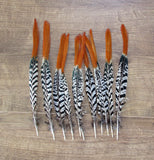 Lady Amherst Pheasant Feathers