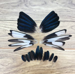 Magpie Feathers - Mixed Pack of 30