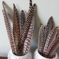 Pheasant Hen Tail Feathers