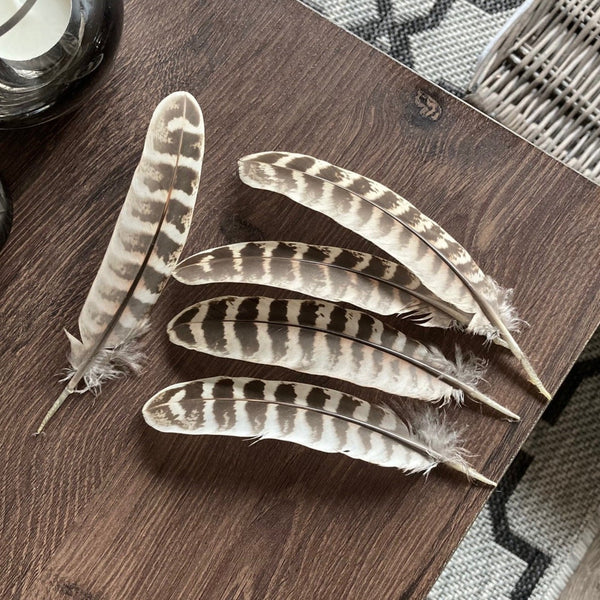 Pheasant Hen Wing Feathers