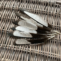 Black & White Magpie Feathers