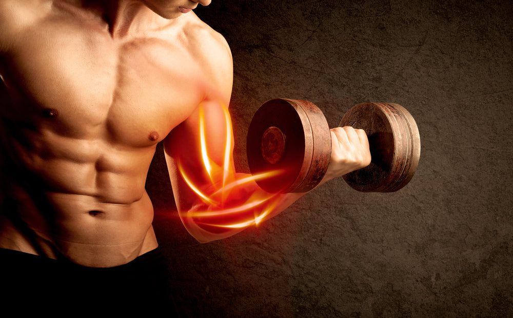 What Is the Best Muscle Building Supplement?